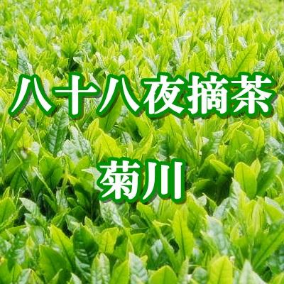 静岡茶 菊川 八十八夜摘茶